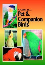 A Guide To Pet And Companion Birds image