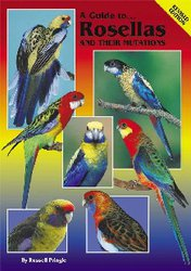 A Guide To Rosellas And Their Mutations image
