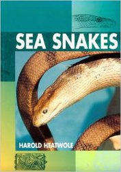 Sea Snakes image